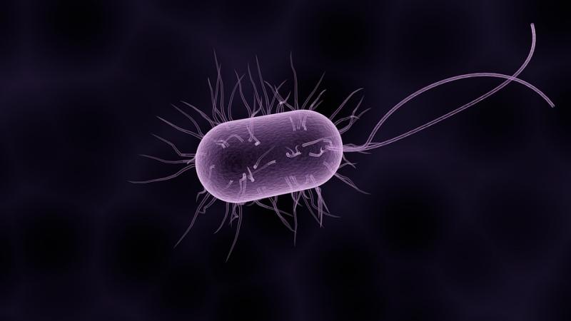 伤寒杆菌通过什么渠道传染感染伤寒杆菌是否可以医治