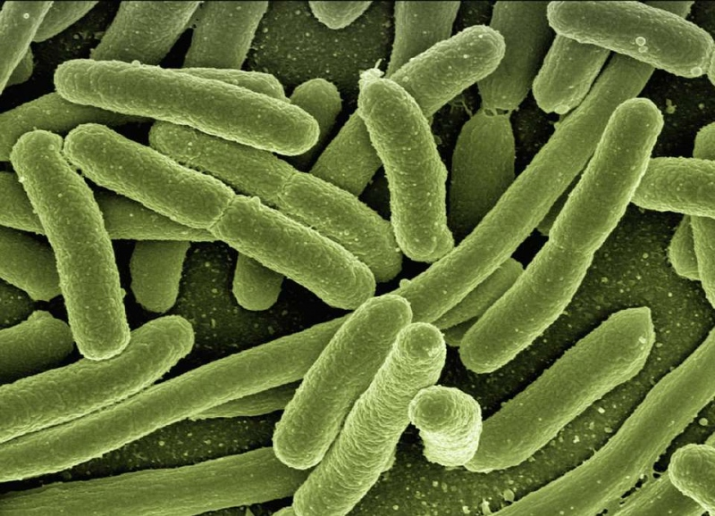 大肠埃希菌是什么大肠埃希菌对人体的影响